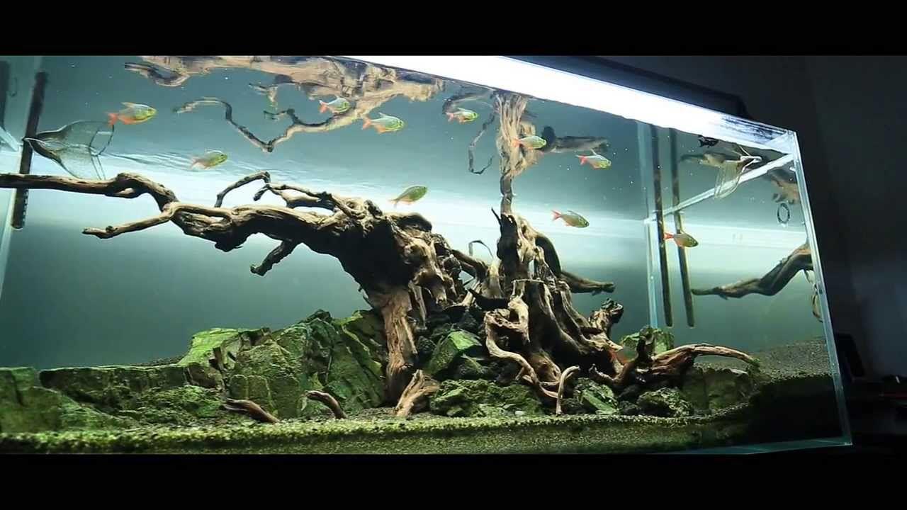 Norbert Sabat Dead Tree Biotope Aquarium Aquascape Aquarium