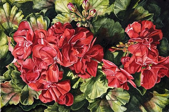 Helen Shideler - Work Zoom: City Flowers - Red Geranium