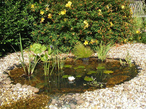 Customer Image Gallery Waterside Water Gardens Pond Pond Plants Pond Landscaping