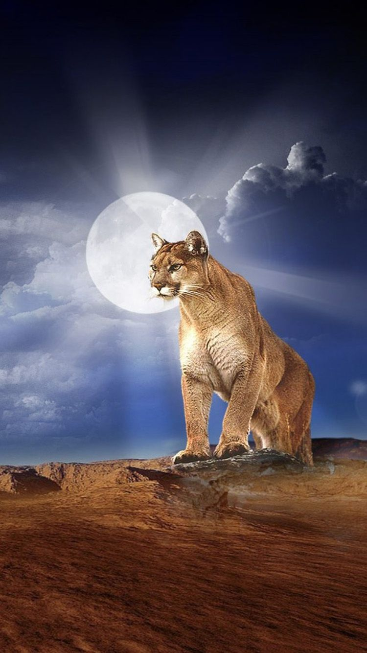 Wallpaper iphone lion - Mountain Lion Hd Wallpaper 8042