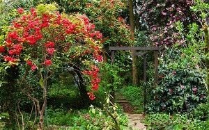 Rhododendron offer the advantages of trees
