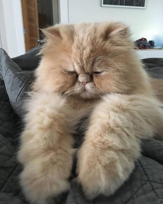 35 Cats Who Will Make You Happy To Be A Crazy Cat Person
