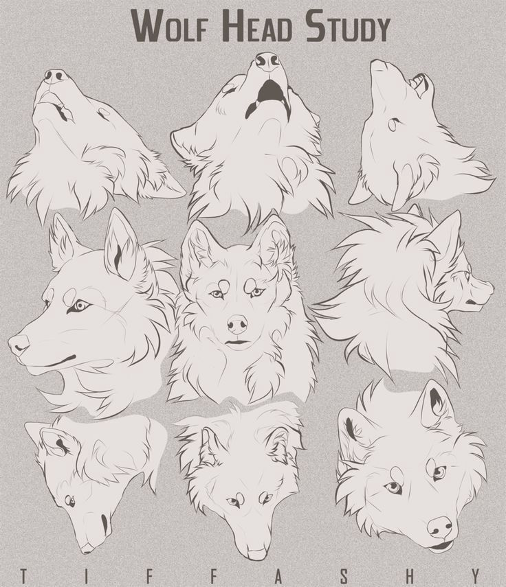Photo of Drawing references (Not updating anymore) – Cats/ wolfs/ dogs