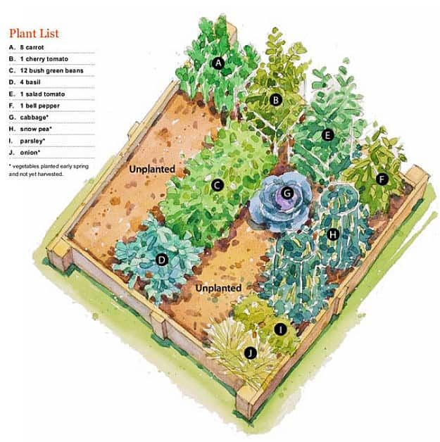 Cool To Warm Raised Bed Vegetable Garden Plan - Avoid growing cool season crops like cauliflower and cabbages in late spring or early summer if you don't want them to bolt or flower. Timing is important in growing cool season crops.