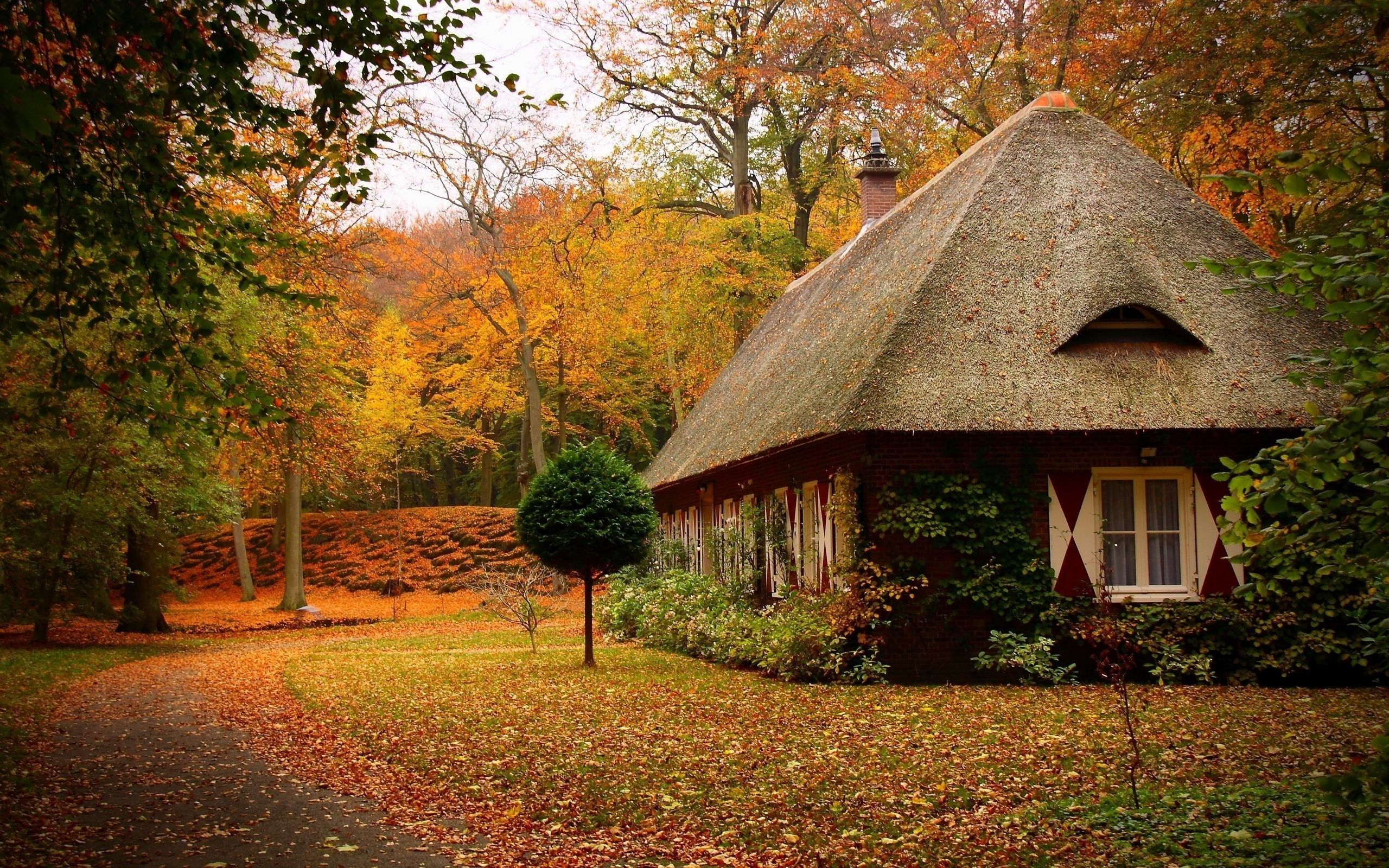 Autumn Park Path Leaf Little House Tree Forest Leaves Sky Nature Forest Cottage Forest House House In The Woods