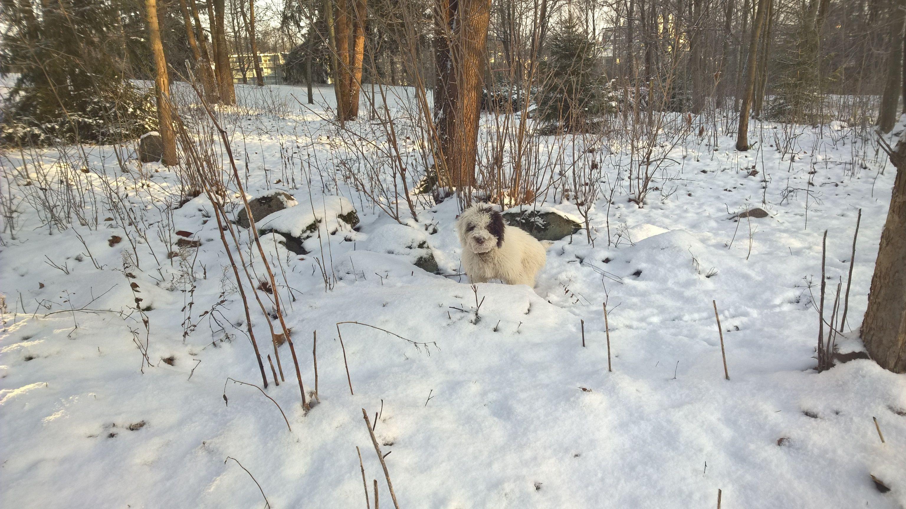 Jäniksen polkuja tutkimassa