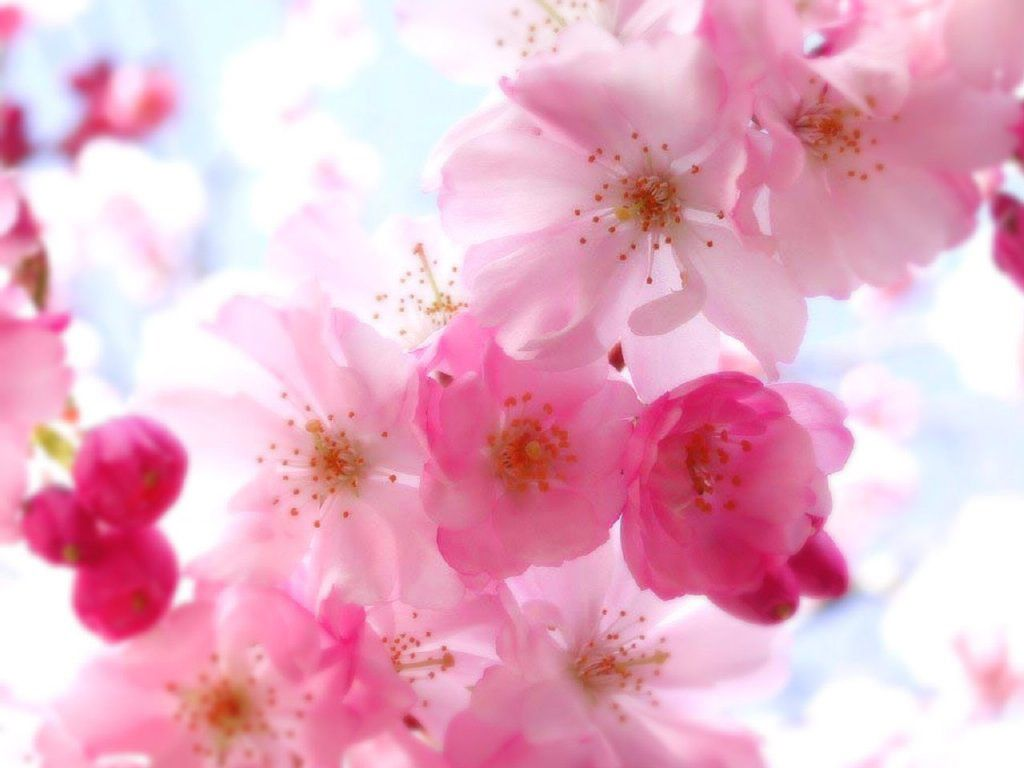 Pink Flowers Desktop Theme