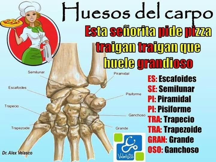 Pin de Yazmin Morales en Cuerpo | Pinterest | Anatomía, Cuerpo y Salud