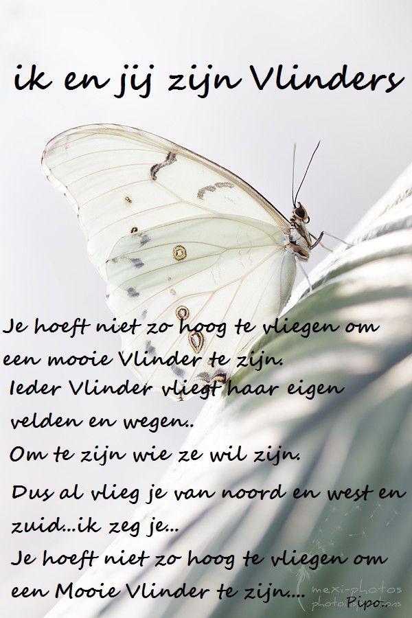New jij en ik zijn vlinders.. | Teksten | Pinterest - Butterfly quotes #JA93