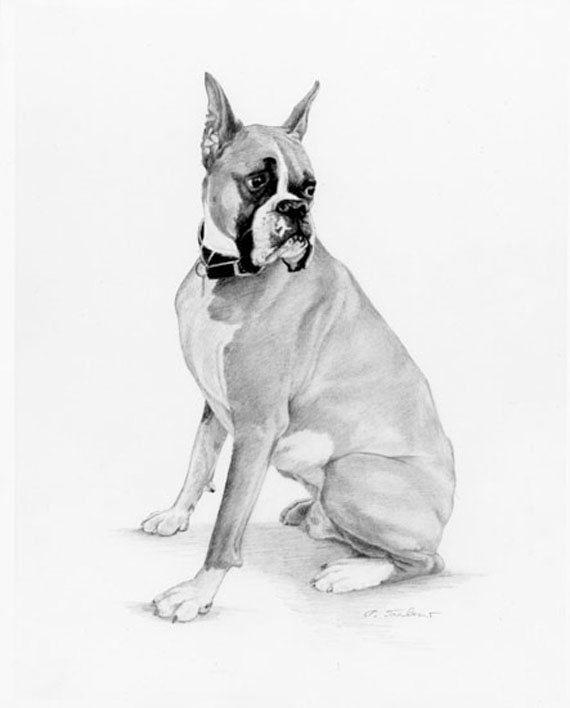 Boxer Dog Drawing Art Print Dog Pencil Drawing Dog Art Print