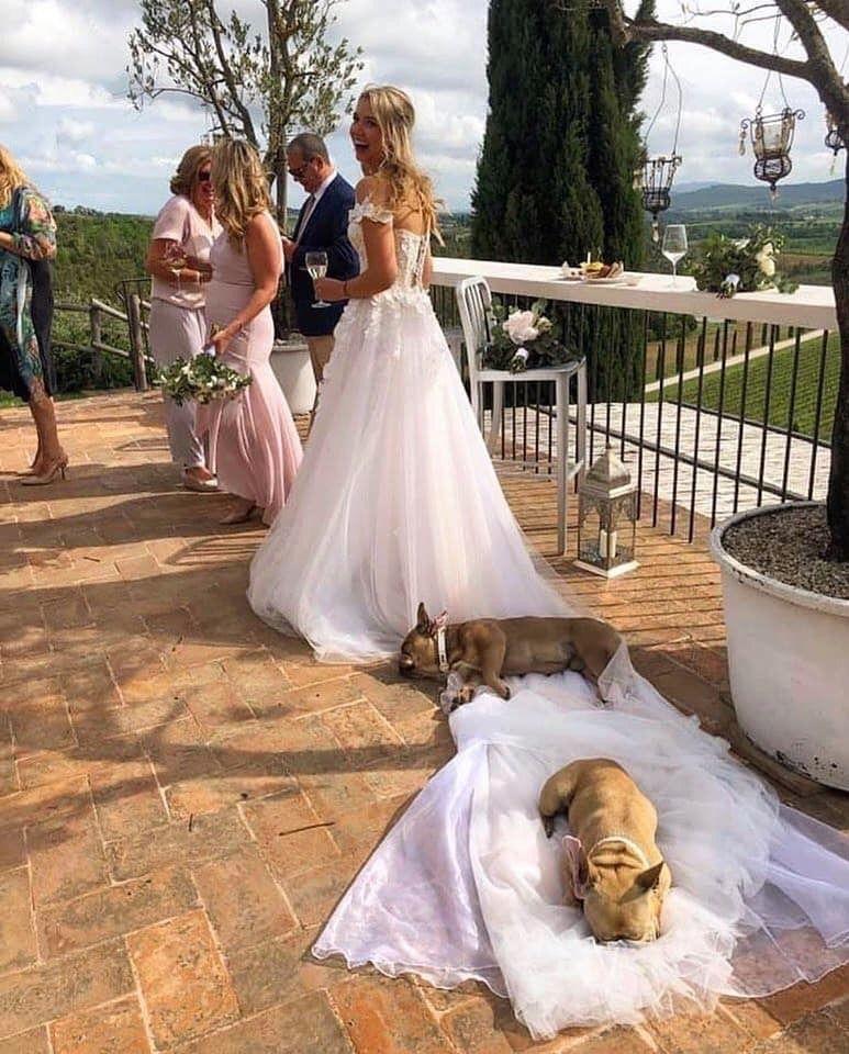 Bridesmaids Funny Animals Funny Animal Memes Pets