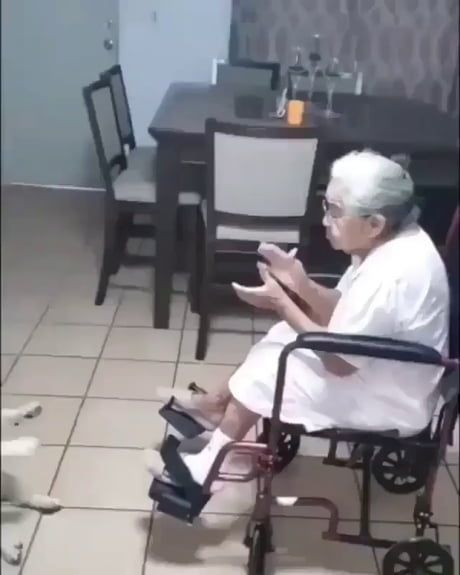 Buy a grandma for your dogs guys, you won't regret
