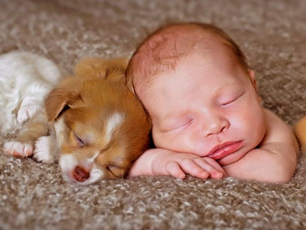 Now I'm really confused.  Getting a baby and a puppy to sleep at the same time?