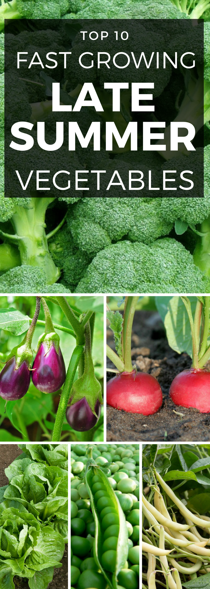 Top 10 Vegetables To Plant In Late Summer With Images 400 x 300