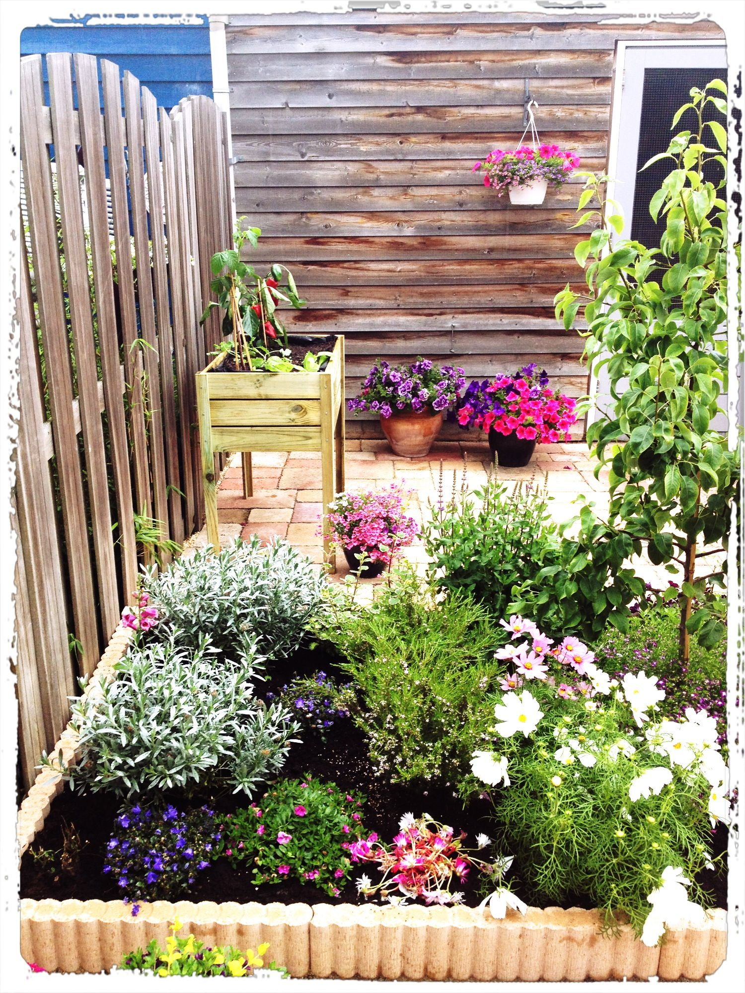 Small vegetable garden green fingers pinterest for Small vegetable garden