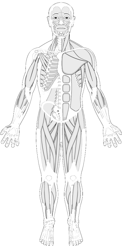 Human Muscles Coloring Anatomy Coloring Book Human Anatomy And Physiology Fun Anatomy