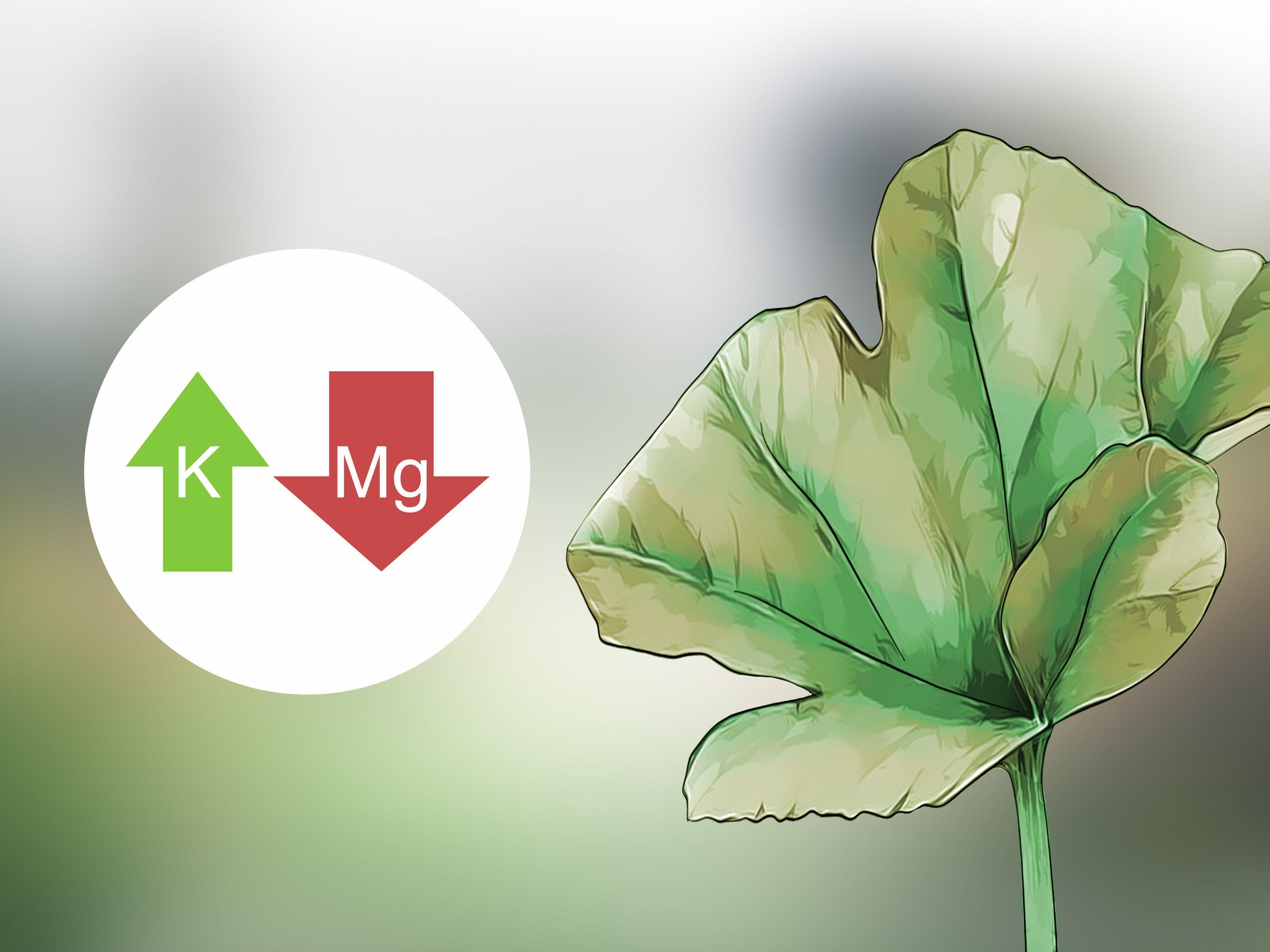 Add potassium to an organic garden plant needs organic