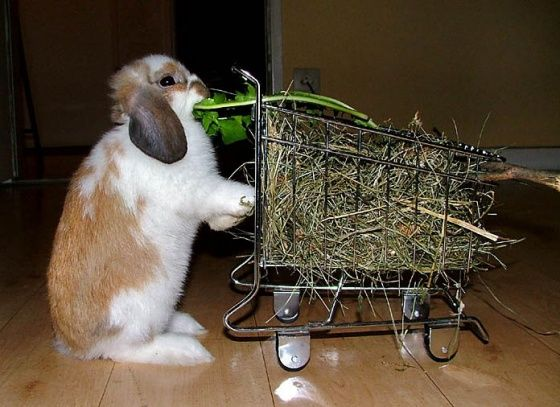 With lines this long, I have to keep up my strength.  Huh.  Where do you keep the fresh produce? #bunny #lop