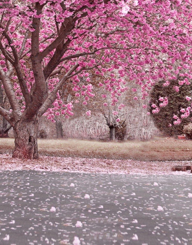 Pink Romantic Cherry Blossoms Flowers Trees Street Avenue Scenery Photography Backdrops 5x7ft Scenery Photography Tree Photography Photography Backdrops