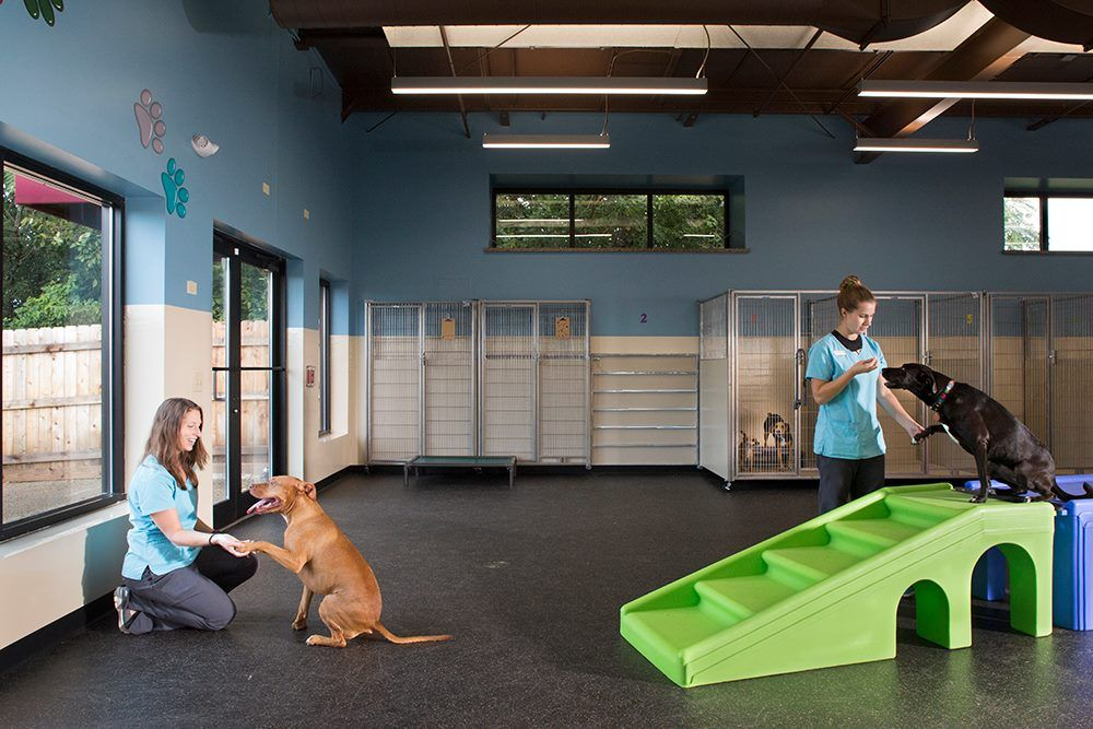 Veterinarian In St Charles (With images) Pet resort