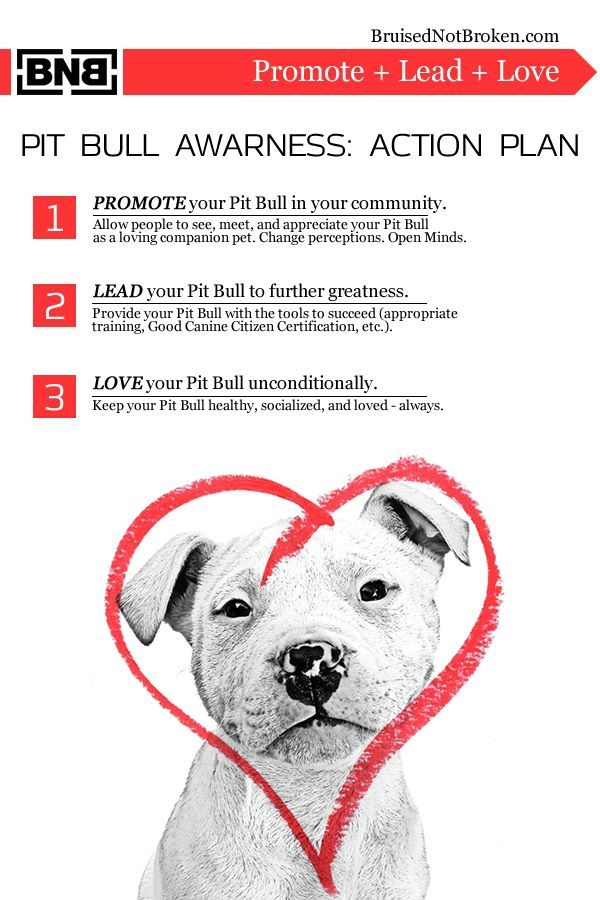 October is Pit Bull Awareness Month! Spread the Word!!! … | What mak…