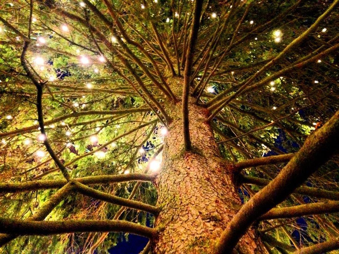 Så här ser landets första julgran ut underifrån! Ykköskuusi piilopaikkana Finlands official christmastree! #finland #christmastree #joulukuusi #julgran #turku #åbo #turkukaupunki #kissmyturku #love_turku #finlandia #ig_finland #visitfinland #ig_trees #tree_captures #tree #tree_magic #xmastree #treeworld #kuusi #suomi #christmaslights #trees #spruce #gran @visitturku by katigron