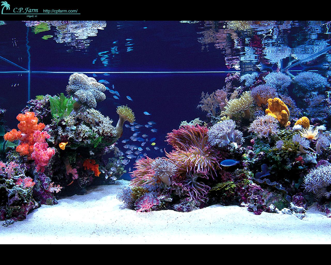 Fish tank japan - Stunning Japanese Aquariums From Cp Farm Aquarium Design Ideas Aquarium Design On Thursday