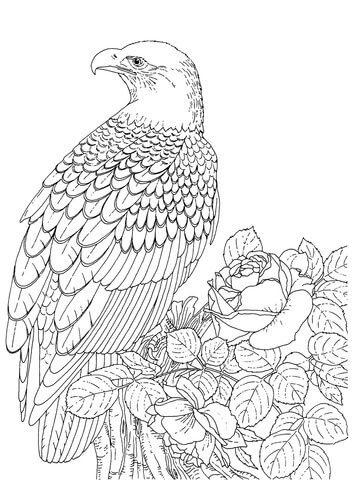 Realistic Bald Eagle Coloring page from Bald eagle category. Select ...