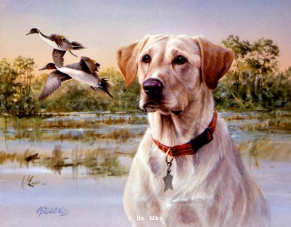 """""""Great Retrievers"""" Yellow Lab-Pintails """"Bailey""""Artist ...  """"Great Ret..."""