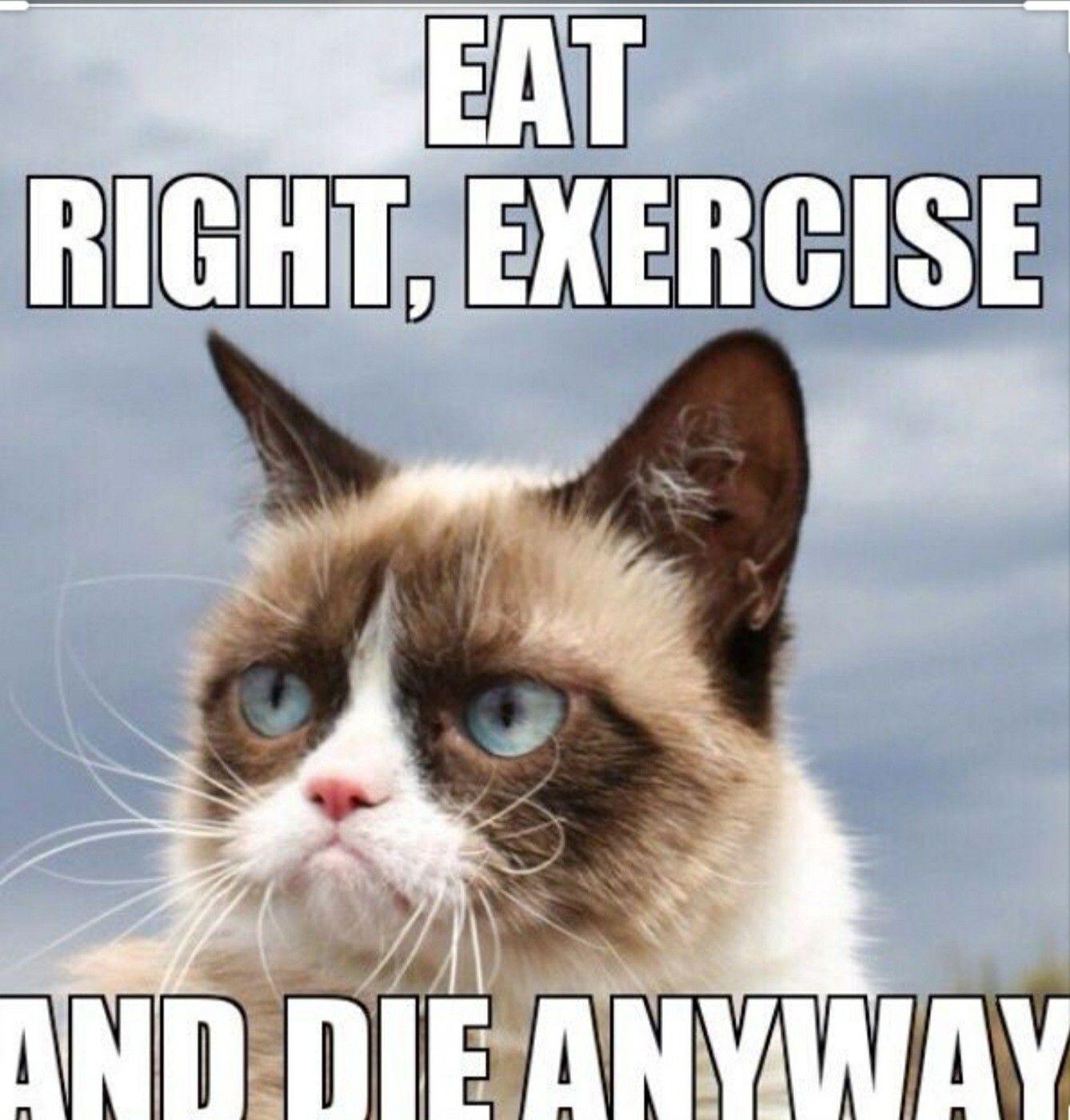 Pin By Darcy On Grumpy Cat Cat Quotes Funny Grumpy Cat Costume Grumpy Cat Birthday