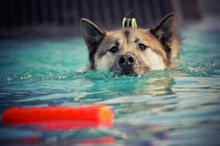 Keeping Dogs Safe In Hot Weather Your Summer Survival Guide With Images Dog Training Obedience Dog Physical Therapy Dog In Heat