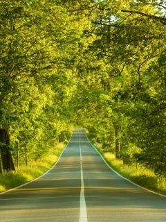 Download free Green Avenue Road Mobile Wallpaper contributed by  roblesavery 4a8aa8c3c