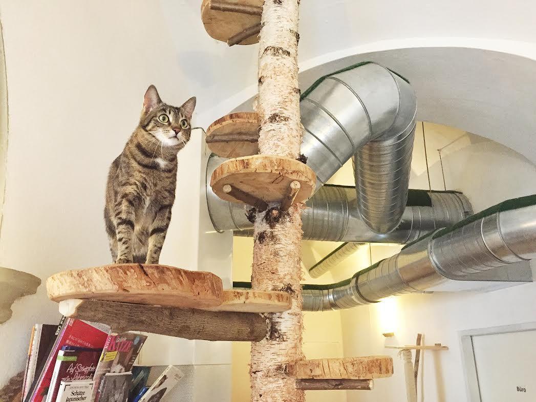 Vienna's Cat Cafe Cafe Neko Cats, Cat cafe, Neko
