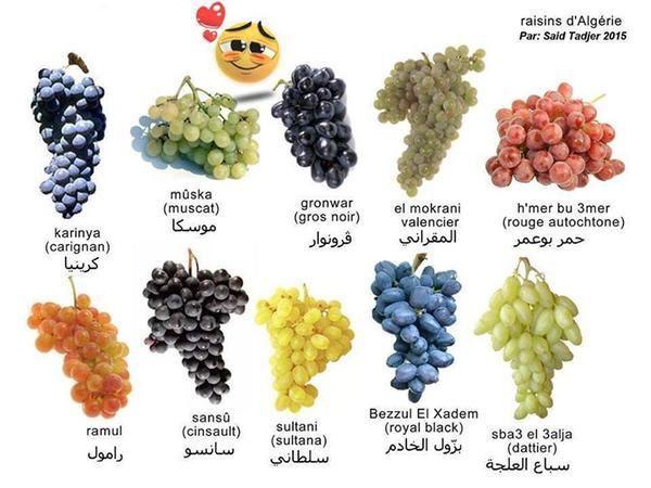 Aℓgyeyaiye يعد العنب الجزائري من أفضل أنواع العنب في العالم Carignan Sultana Grapes