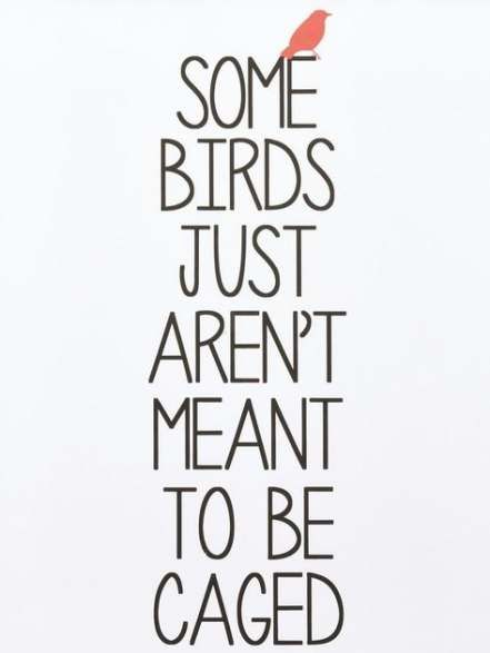 Best bird flying quotes inspiration ideas