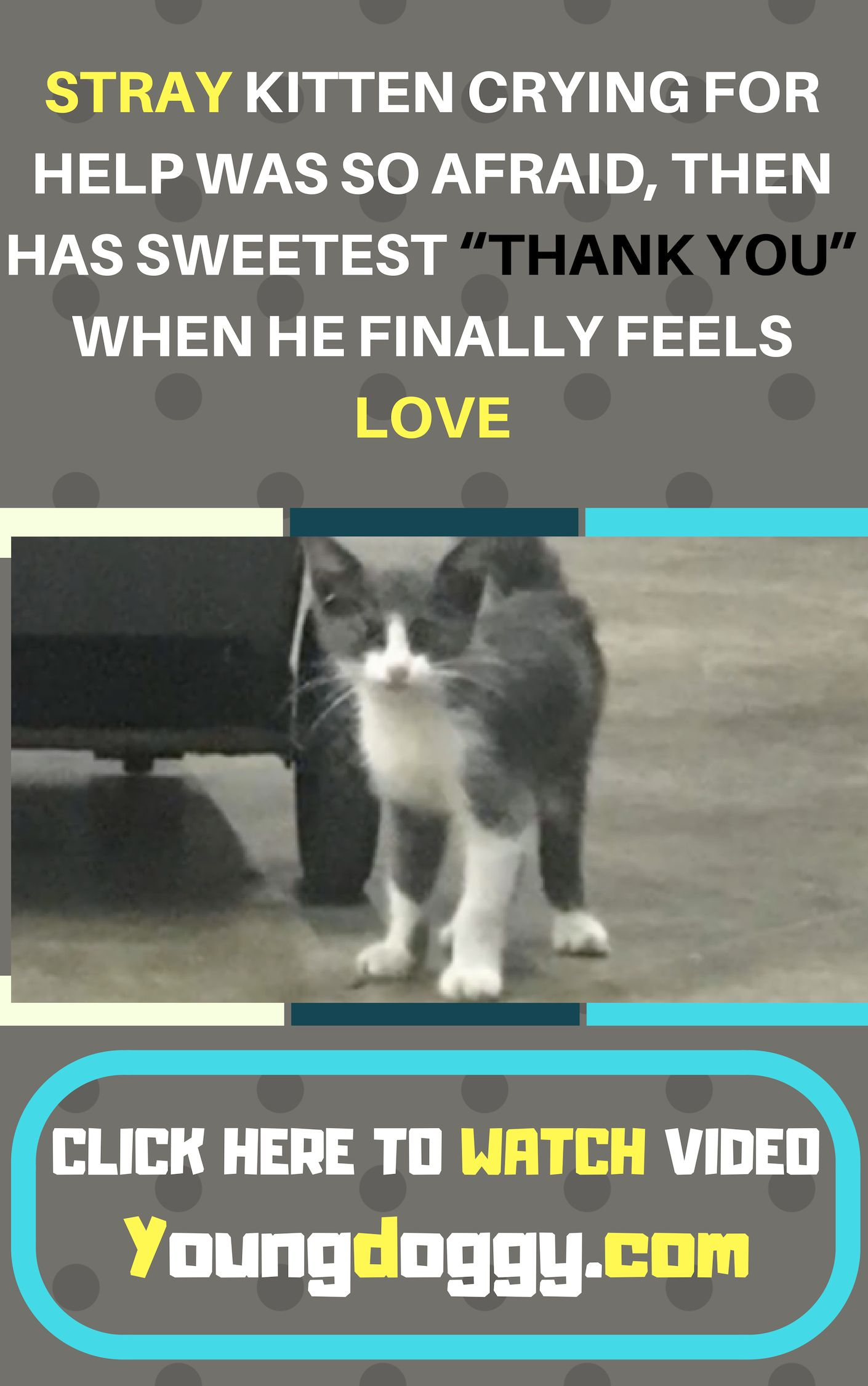 Stray Kitten Crying For Help Was So Afraid Then Has Sweetest Thank You When He Finally Feels Love Kitten Rescue Cat Rescue Cat Rescue Stories