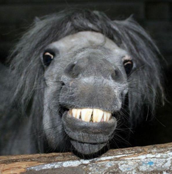 Картинка улыбка лошади смешные, картинки надписью