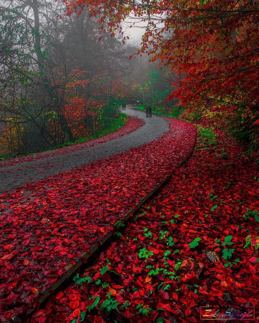It Looks Like Nature Is Blooding Yedigoller National Park Bolu Turkey Pho Beautiful Nature Landscape Nature Pictures
