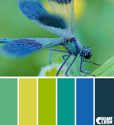 Color Palette Dragonfly Blue Green Yellow Colour