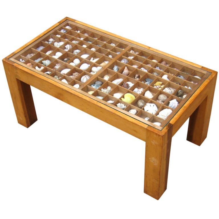 Seashell collection coffee table shell box and display Display coffee table