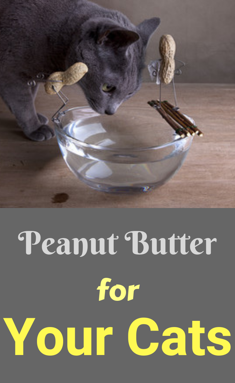Cat Nutrition Facts Peanut Butter. Typically speaking