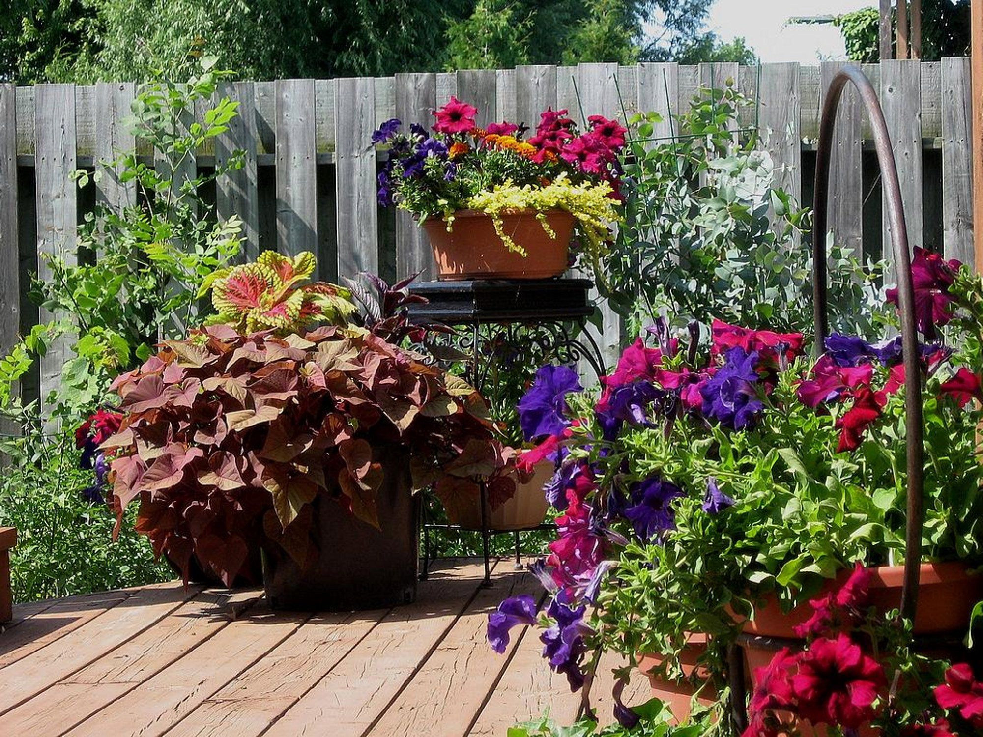 pics of flower container gardens | making a patio flower container ... - Patio Container Garden Ideas