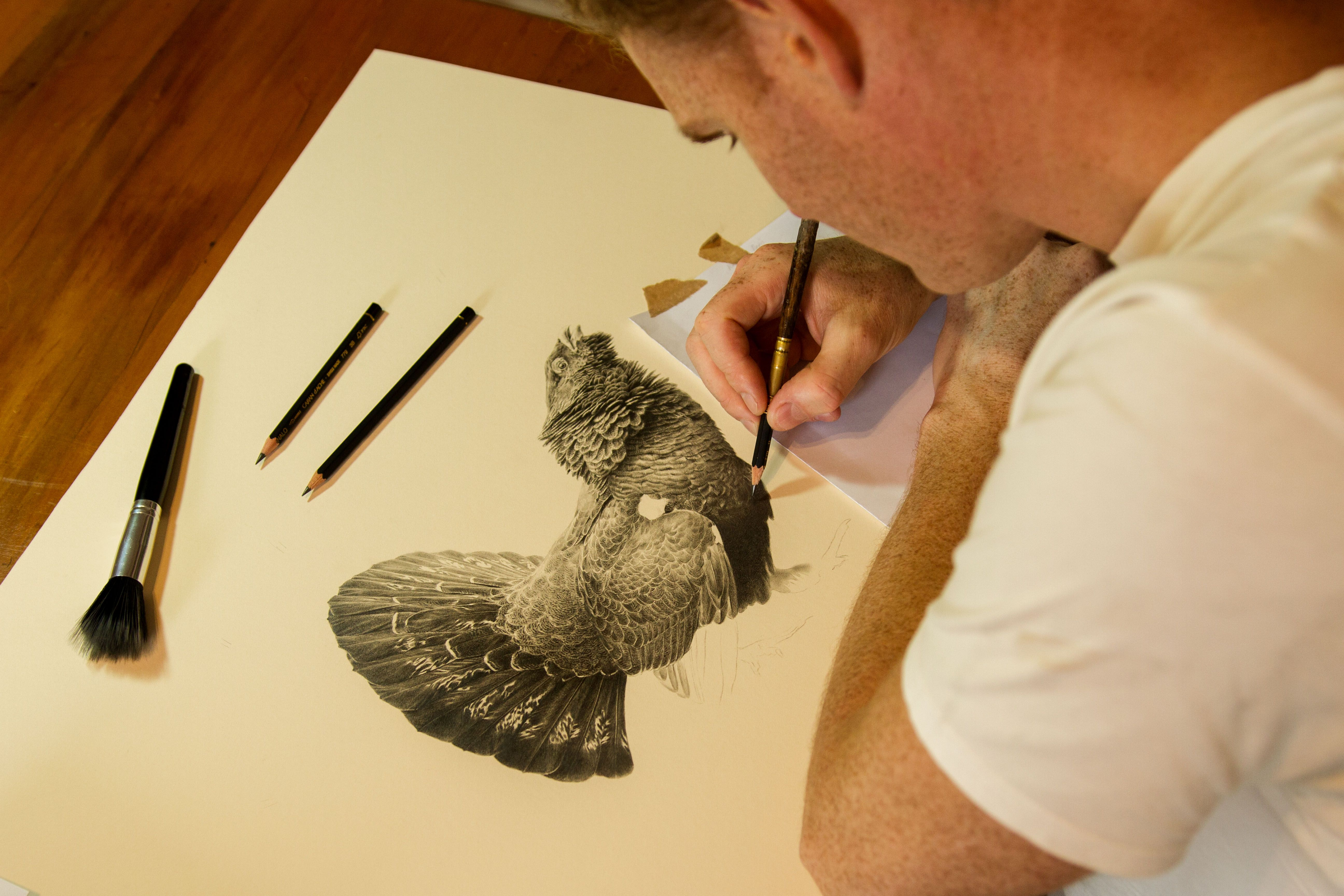Drawing a capercaillie grouse in pencil graphite artist jonathan