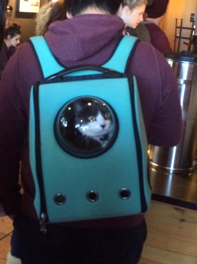 These cat backpacks are the funniest 9b16448809f9c