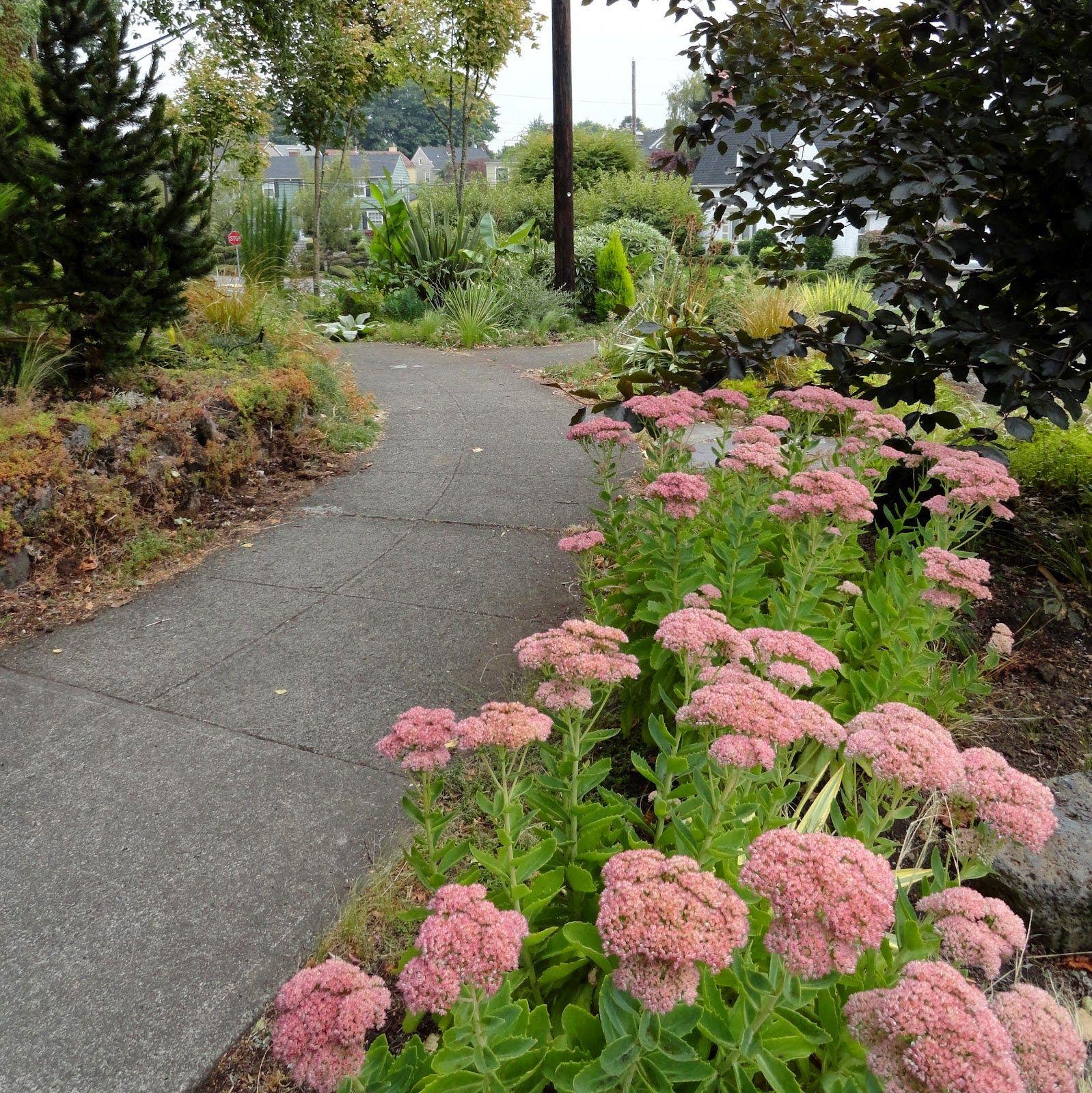 Hellstrip Gardening   Google Search