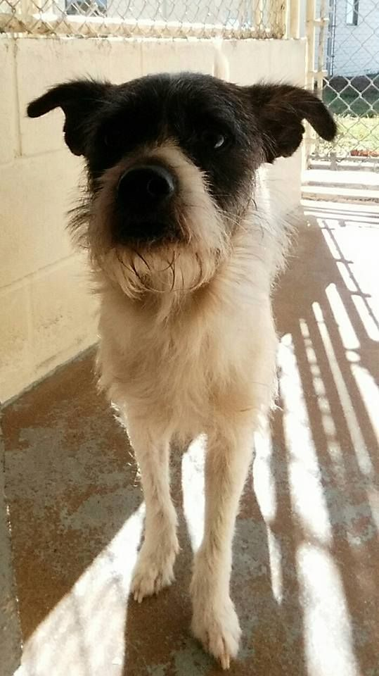11 27 16 Male Available For Adoption Or Rescue Mineola