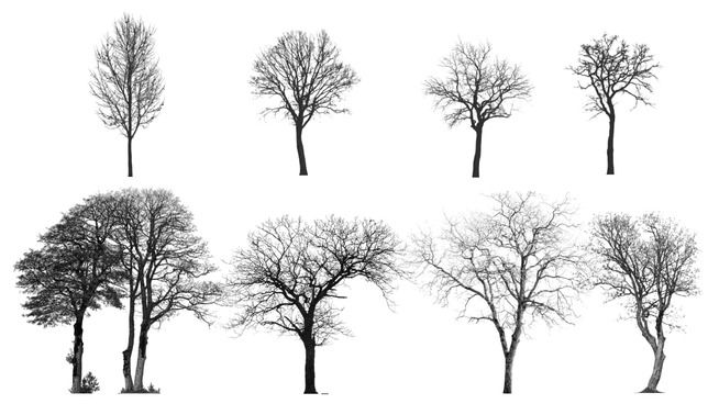 Large preview of 3D Model of Tree Silhouette Collection