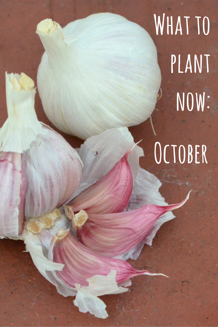 What to plant now October Winter vegetables gardening