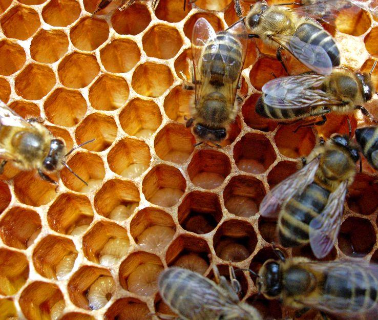 как пчелы в апреле носят мед фото интернете привлекают внимание