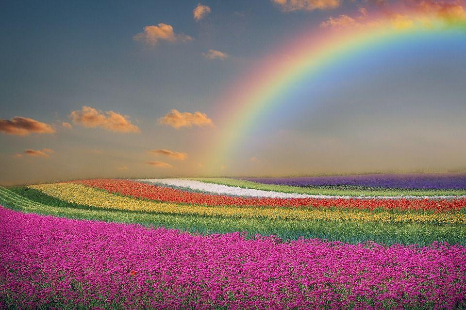 Free Image on Pixabay - Spring, Landscape, Flowers, Rainbow ...